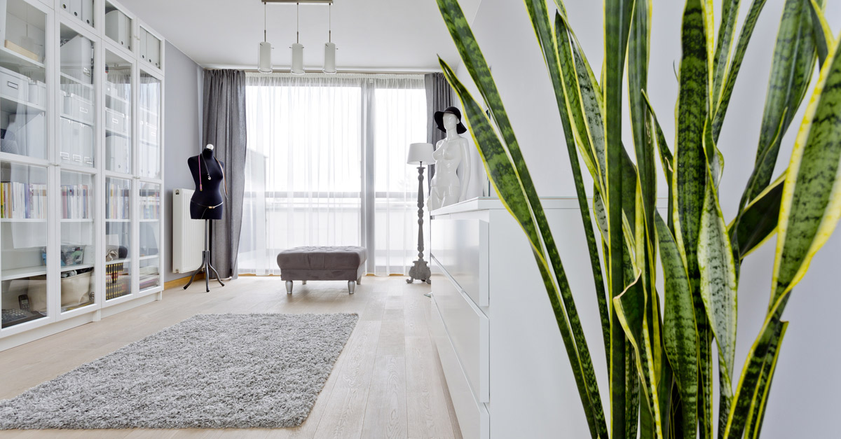 piante-da-interno-qualita-aria-indoor